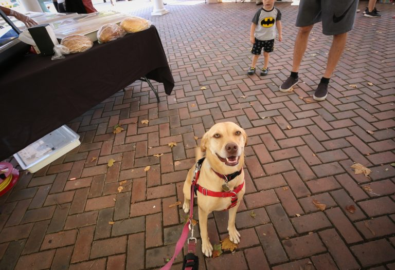 Asha at the Kentlands Main Street Market