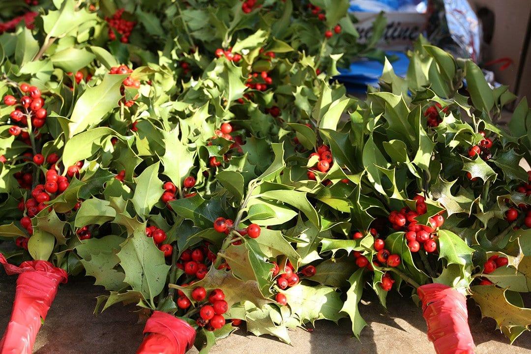 Bunches of Mistletoe