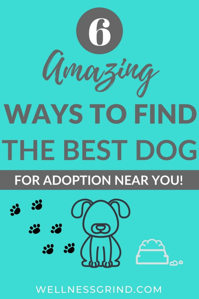 6 Ways to Find The Best Dog for Adoption Near You