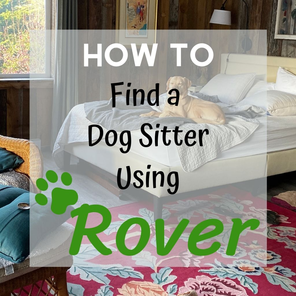 How to find a dog sitter using Rover