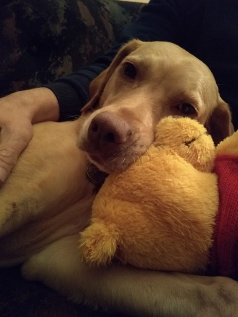 Asha hugging her Winnie the Pooh doll while she is at her dog sitter's house.